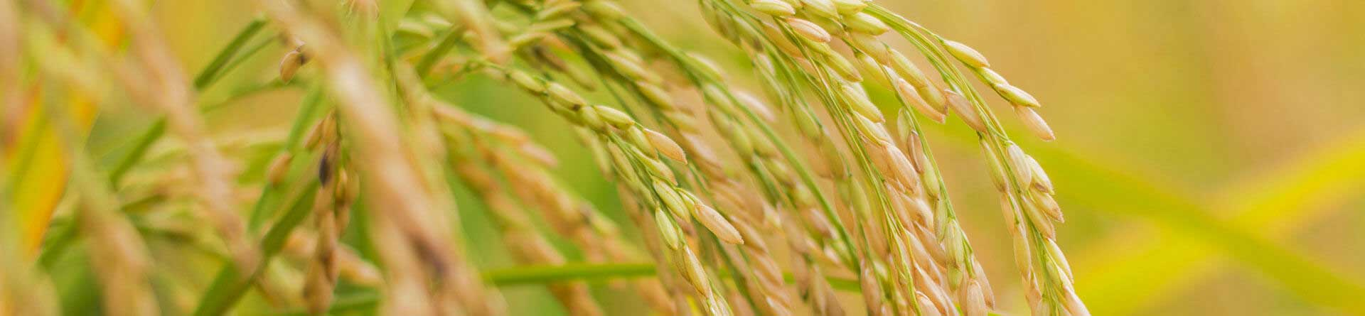 河南先科之星植物保护有限公司